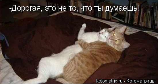 Котоматрица: -Дорогая, это не то, что ты думаешь!