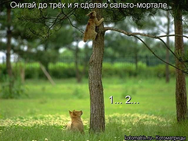 Котоматрица: Считай до трёх и я сделаю сальто-мортале 1... 2...