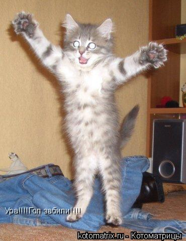 Котоматрица: Ура!!!!Гол забили!!!!