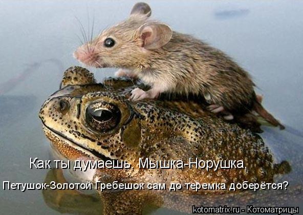 Котоматрица: Как ты думаешь, Мышка-Норушка, Петушок-Золотой Гребешок сам до теремка доберётся?