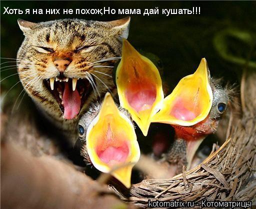 Котоматрица: Хоть я на них не похож,Но мама дай кушать!!!