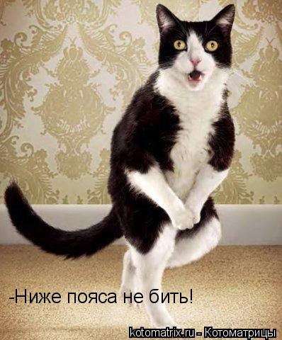 Котоматрица: -Ниже пояса не бить! -Ниже пояса не бить!