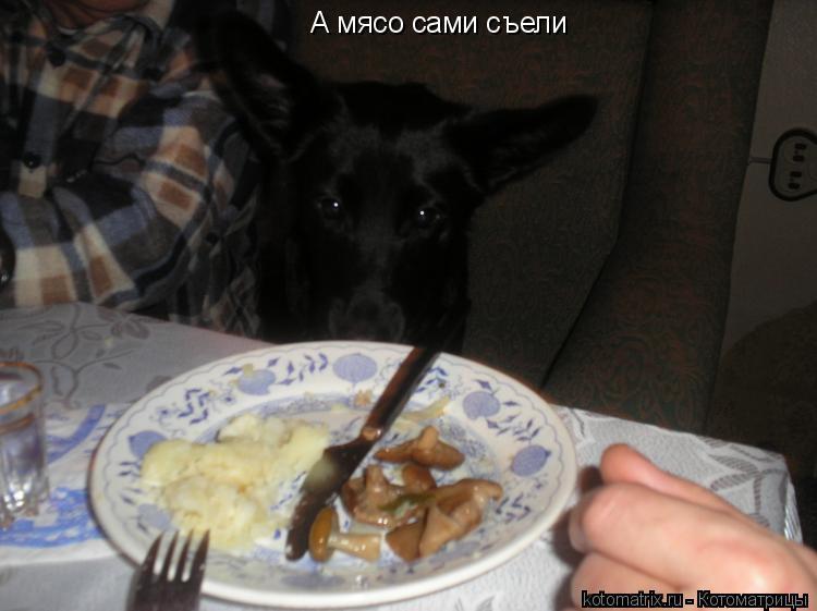 Котоматрица: А мясо сами съели