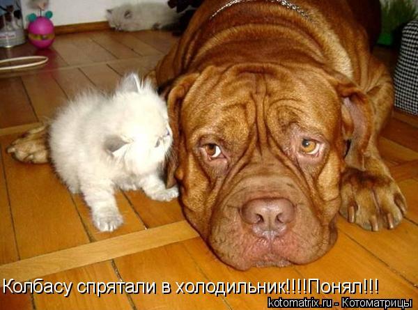 Котоматрица: Колбасу спрятали в холодильник!!!!Понял!!!