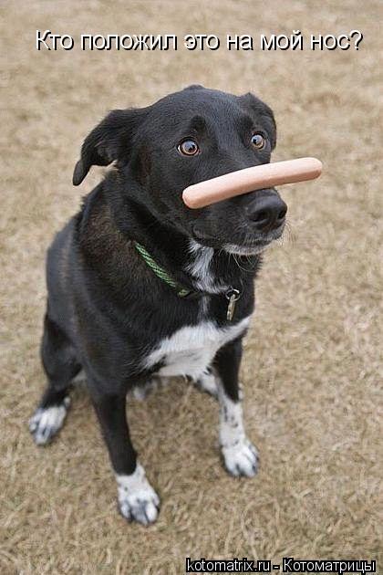 Котоматрица: Кто положил это на мой нос?
