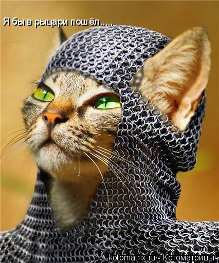 Котоматрица: Я бы в рыцари пошёл.....