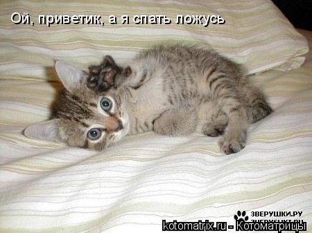 Котоматрица: Ой, приветик, а я спать ложусь