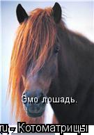 Котоматрица: Эмо лошадь.