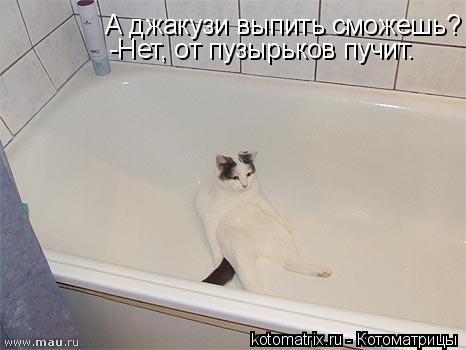 Котоматрица: А джакузи выпить сможешь? -Нет, от пузырьков пучит.