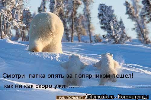 Котоматрица: Смотри, папка опять за полярником пошел!  как ни как скоро ужин...