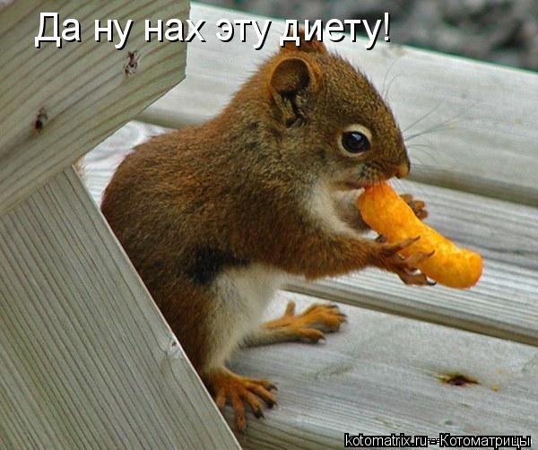Котоматрица: Да ну нах эту диету!