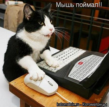 Котоматрица: Мышь поймал!!