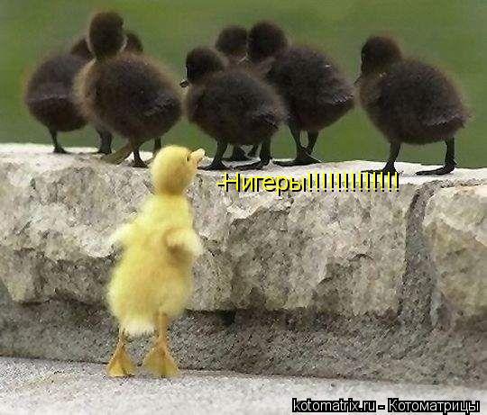 Котоматрица: -Нигеры!!!!!!!!!!!!!