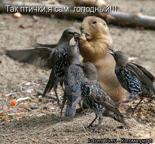 Котоматрица: Так птички,я сам  голодный!!!