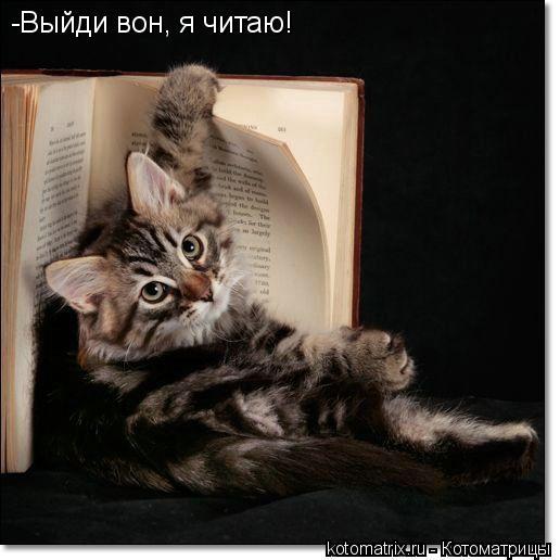 Котоматрица: -Выйди вон, я читаю!