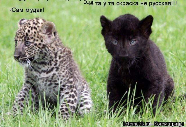 Котоматрица: -Чё та у тя окраска не русская!!! -Чё та у тя окраска не русская!!! -Чё та у тя окраска не русская!!! -Сам мудак! -Сам мудак!