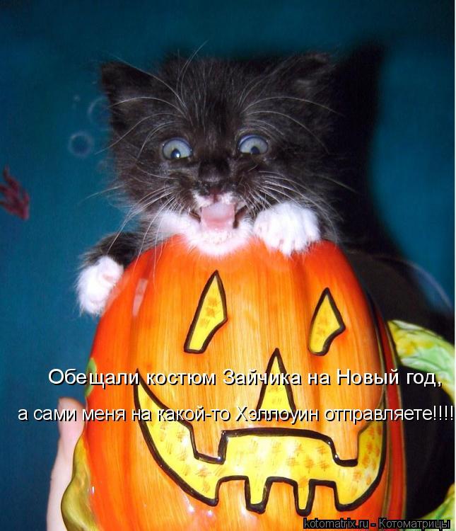 Котоматрица: Обещали костюм Зайчика на Новый год, а сами меня на какой-то Хэллоуин отправляете!!!!