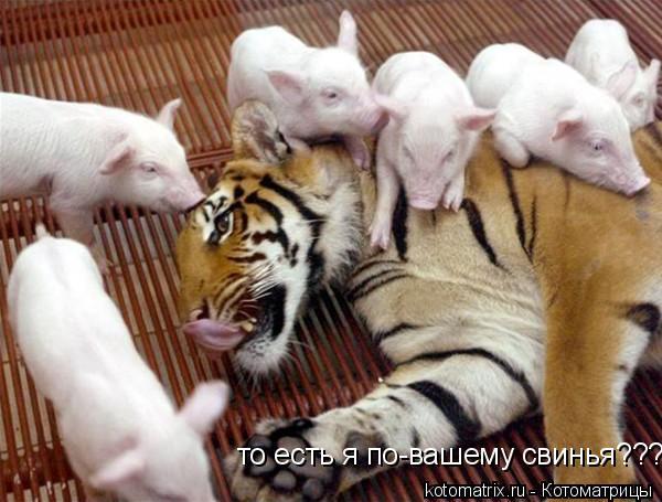 Котоматрица: то есть я по-вашему свинья???