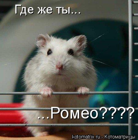 Котоматрица: Где же ты... ...Ромео????