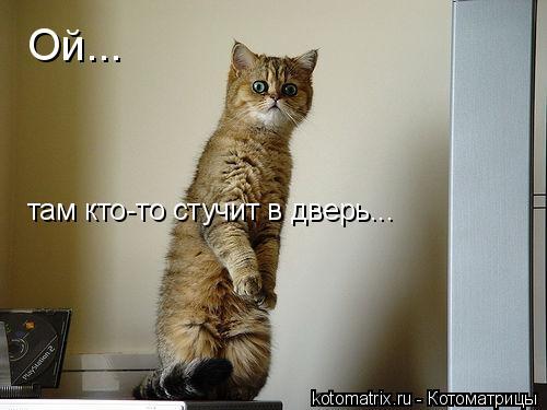 Котоматрица: Ой... там кто-то стучит в дверь...