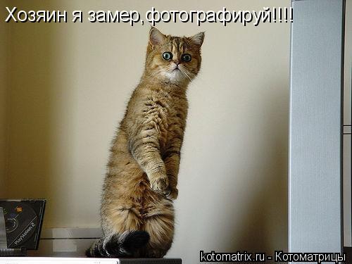 Котоматрица: Хозяин я замер,фотографируй!!!!