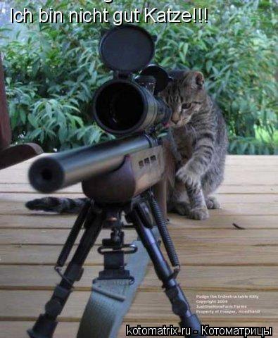 Котоматрица: Ich bin nicht gut Katze!!! Ich bin nicht gut Katze!!!