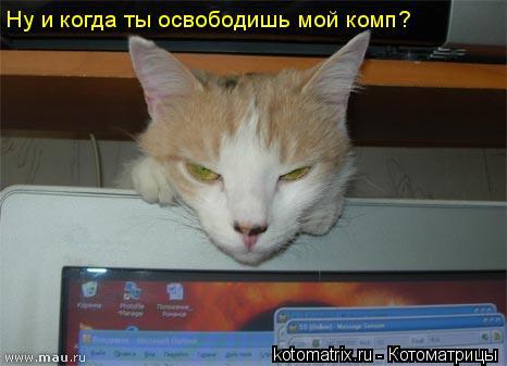 Котоматрица: Ну и когда ты освободишь мой комп?