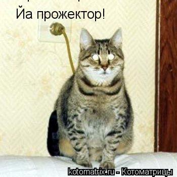 Котоматрица: Йа прожектор! Йа прожектор!