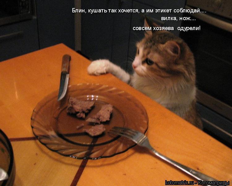 Котоматрица: Блин, кушать так хочется, а им этикет соблюдай.... вилка, нож.... совсем хозяева  одурели!