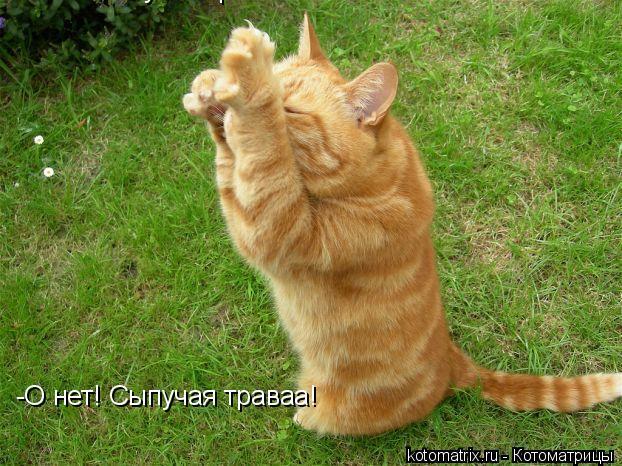 Котоматрица: -О нет! Сыпучая траваа! -О нет! Сыпучая траваа!