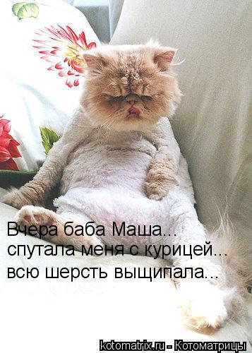 Котоматрица: Вчера баба Маша... спутала меня с курицей... всю шерсть выщипала...