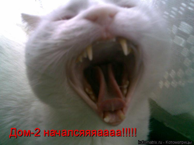 Котоматрица: Дом-2 началсяяяаааа!!!!!