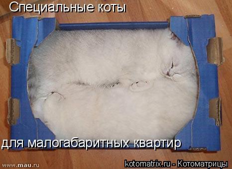 Котоматрица: Специальные коты  для малогабаритных квартир