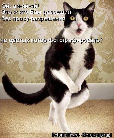 Котоматрица: Ой, ай-яй-яй! Это ж кто Вам разрешил без просу-разрешения не одетых котов фотографировать?