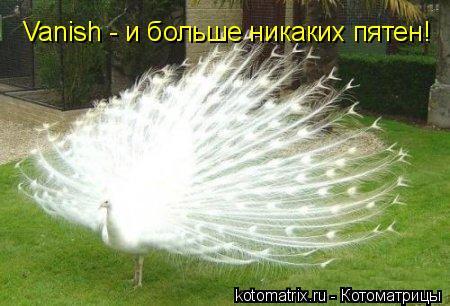 Котоматрица: Vanish - и больше никаких пятен!