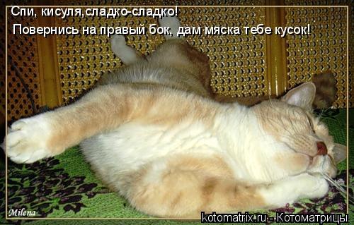 Котоматрица: Спи, кисуля,сладко-сладко! Повернись на правый бок, дам мяска тебе кусок!