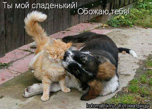 Котоматрица: Ты мой сладенький! Обожаю тебя!