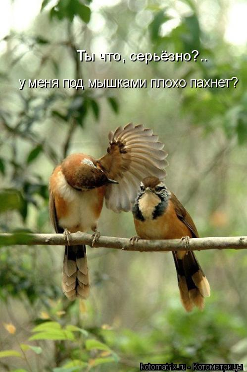 Котоматрица: Ты что, серьёзно?.. у меня под мышками плохо пахнет?