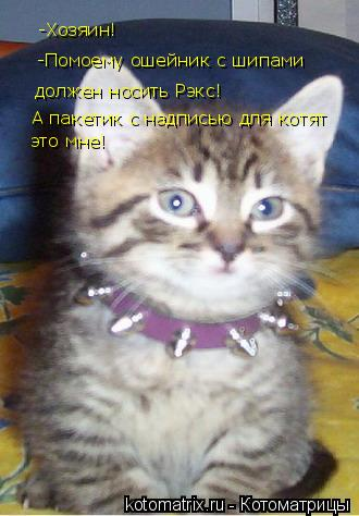 Котоматрица: -Хозяин!  -Помоему ошейник с шипами должен носить Рэкс! А пакетик с надписью для котят это мне!