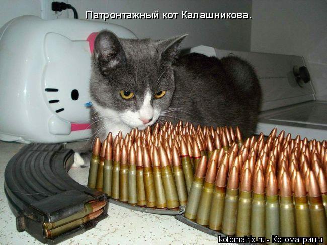 Котоматрица: Патронтажный кот Калашникова.