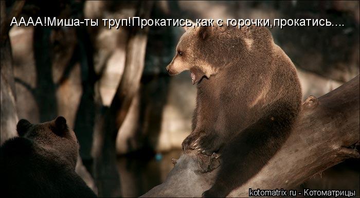 Котоматрица: АААА!Миша-ты труп!Прокатись,как с горочки,прокатись....