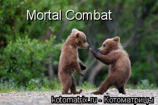 Котоматрица: Mortal Combat