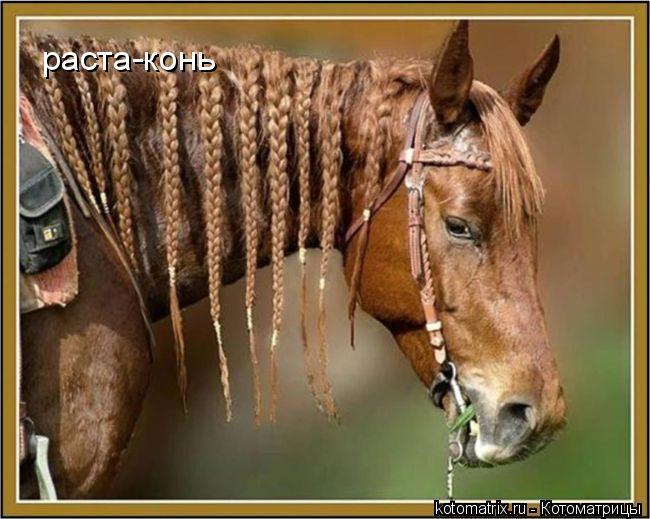Котоматрица: раста-конь