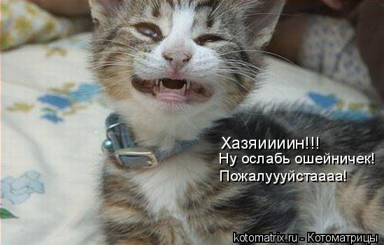 Котоматрица: Хазяиииин!!! Ну ослабь ошейничек! Пожалуууйстаааа!