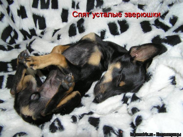 Котоматрица: Спят усталые зверюшки