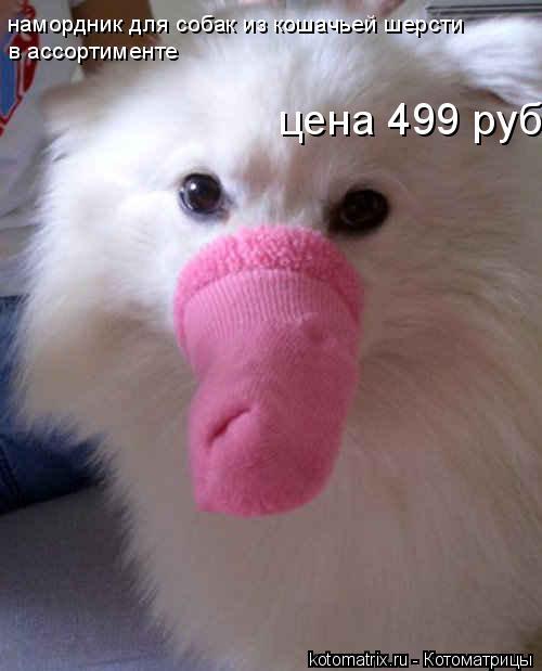 Котоматрица: намордник для собак из кошачьей шерсти в ассортименте цена 499 руб.