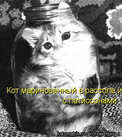 Котоматрица: Кот маринованный в рассоле и  с патиссонами