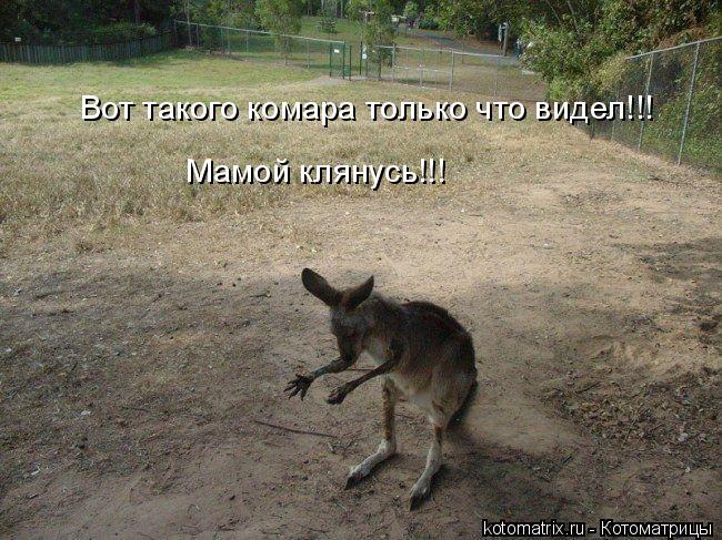 Котоматрица: Вот такого комара только что видел!!! Мамой клянусь!!!