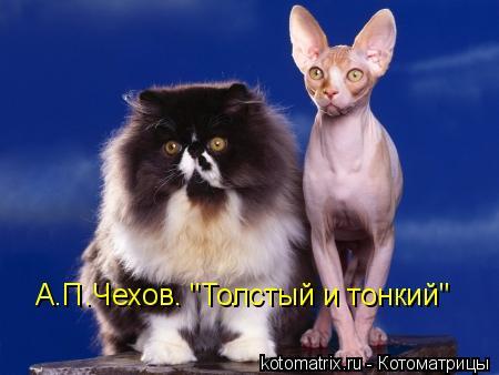 """Котоматрица: А.П.Чехов. """"Толстый и тонкий"""""""