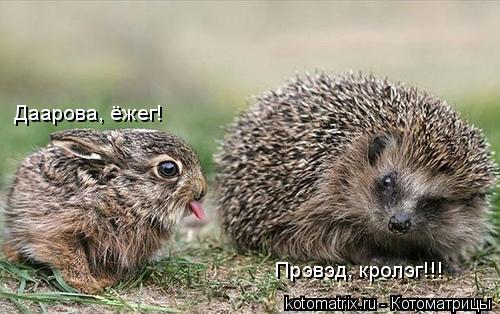 Котоматрица: Даарова, ёжег! Прэвэд, кролэг!!!